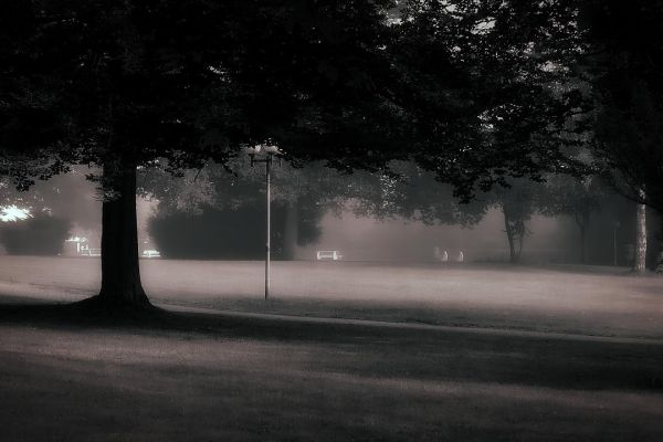 nebliger-morgen-im-park8595B6E5-D939-4585-006D-08CB5D05BD9F.jpg